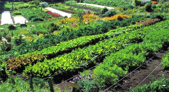 permaculture1.jpg