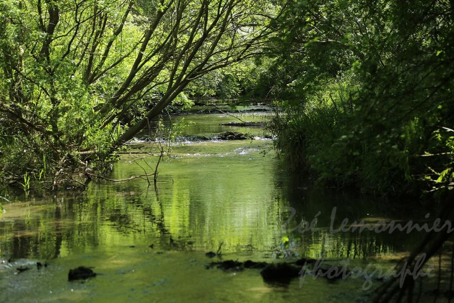rivière GI.jpg