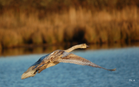 oiseaux mammifères