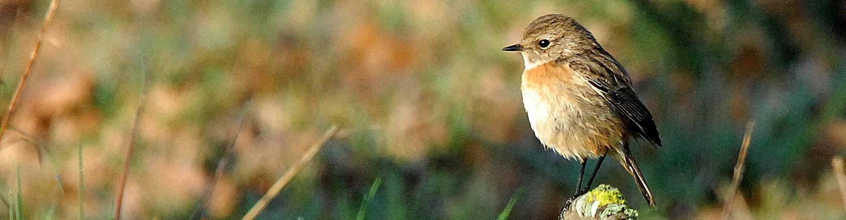 oiseaux mammifères du morbihan, de Bretagne