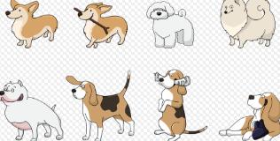 dofus pets.PNG