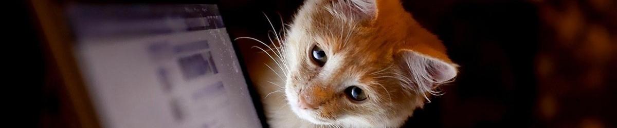 Blog do meu gatinho