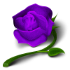 rose-purple.png