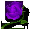 rose-purple.png