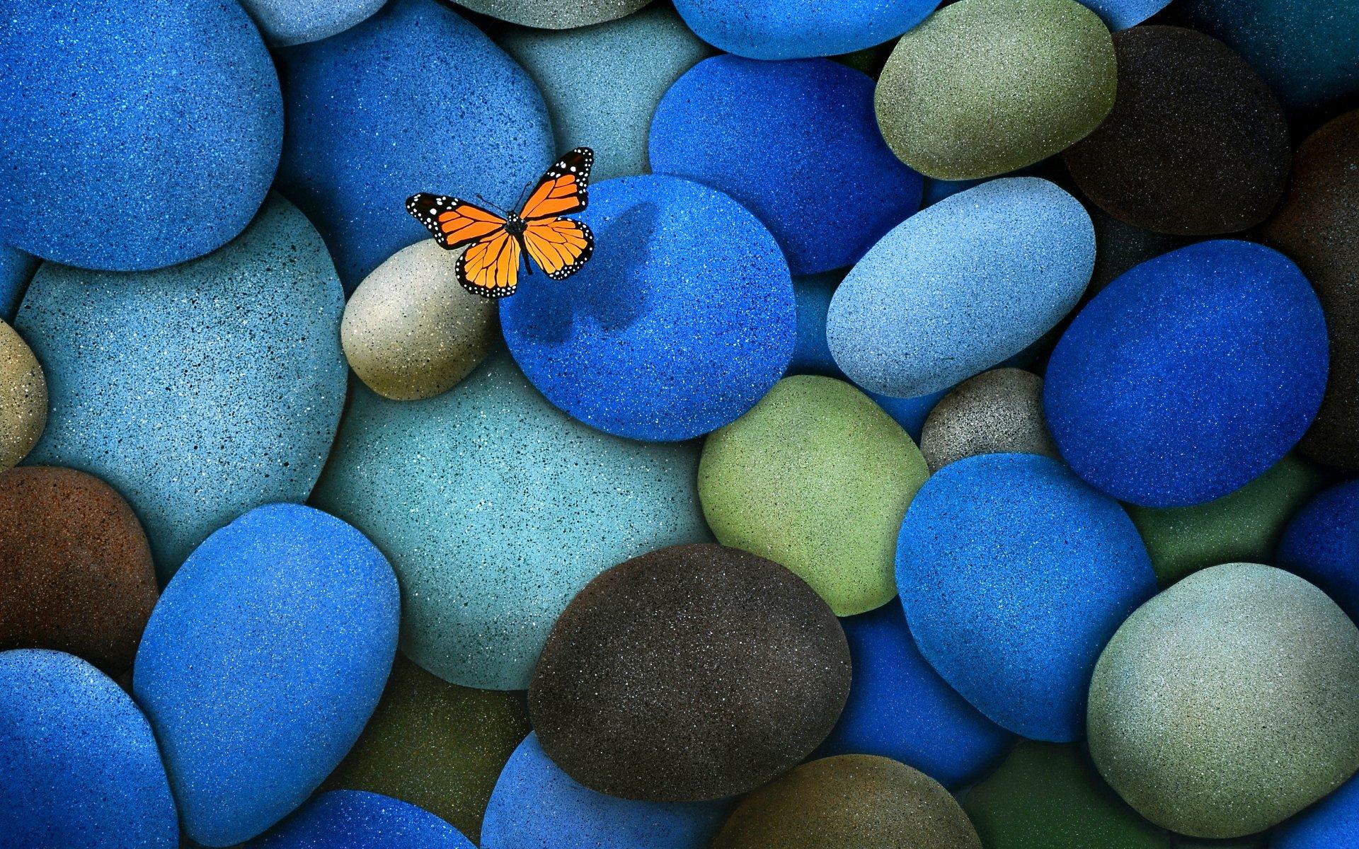 papillon bleu.jpeg