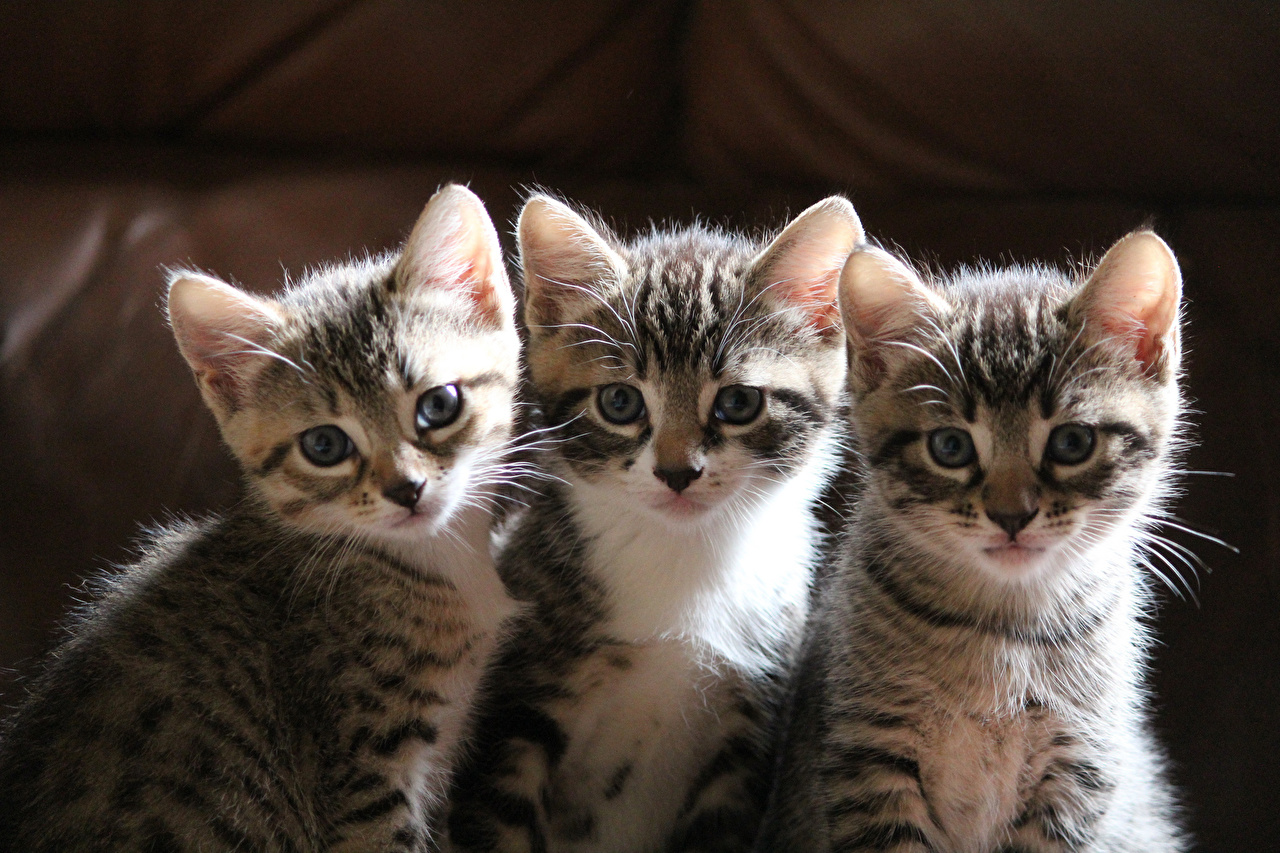 la décade est plus une année dont la réincarnation du club pimkie est réincarnée en chat