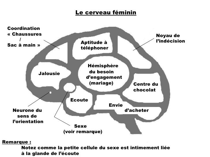 le cerveau d\\\'une femme