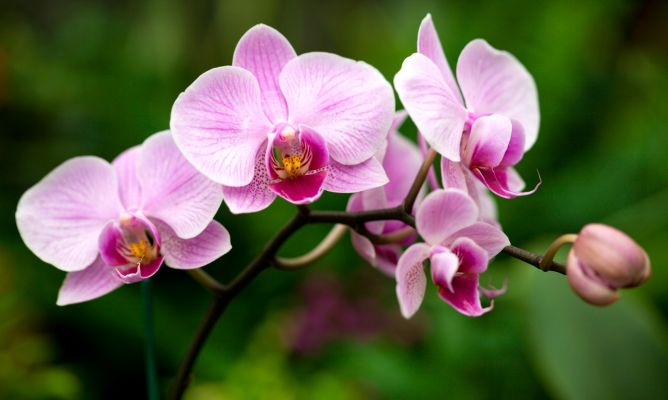 como-plantar-orquídeas.jpg