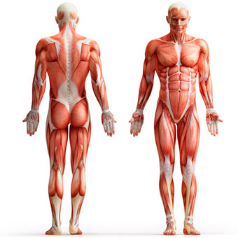 muscle-cramps-s3-types-and-causes.jpg