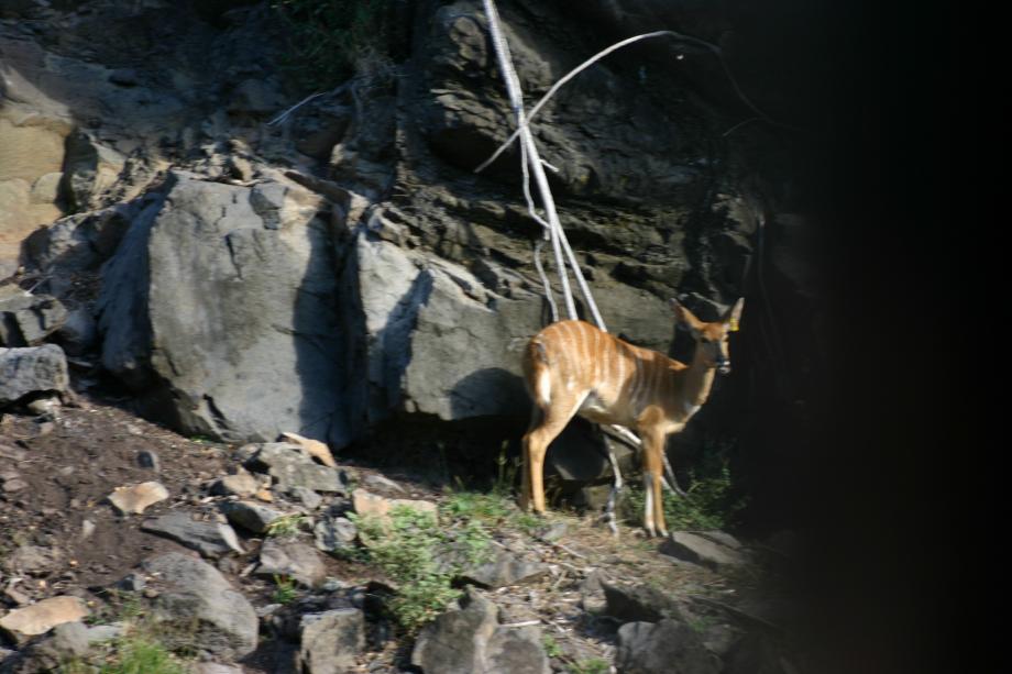 quelques animaux vu lors du safari