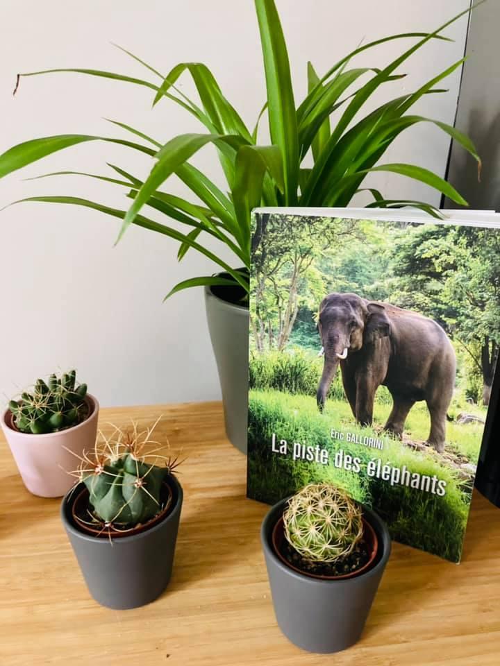 La piste des éléphants, mise en scène par Cha Deruiff...