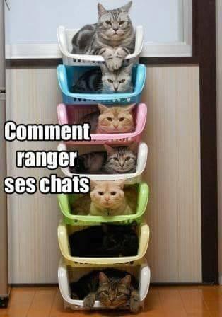 ranger les chats.jpg