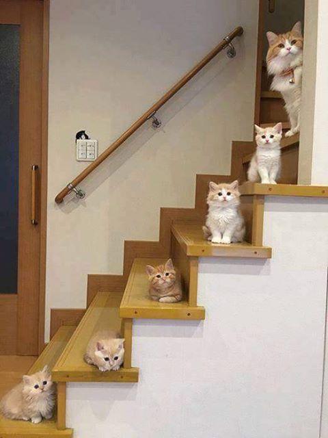 escalier de chats.jpg