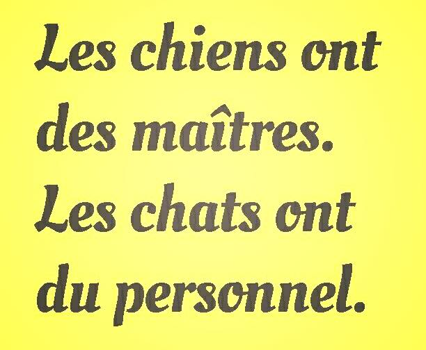 CHIENS ET CHATS.jpg