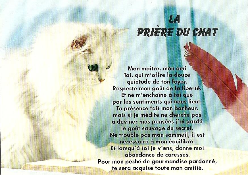 prière du chat.jpg