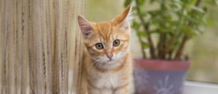 chaton-rebord-de-fenetre.jpg