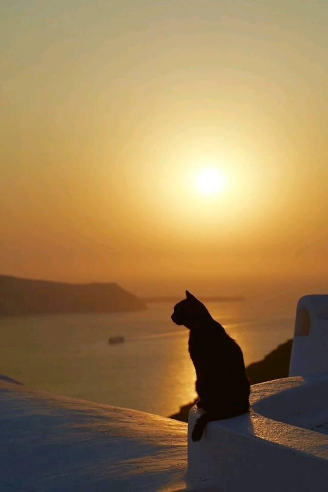 chaton crépuscule.jpg