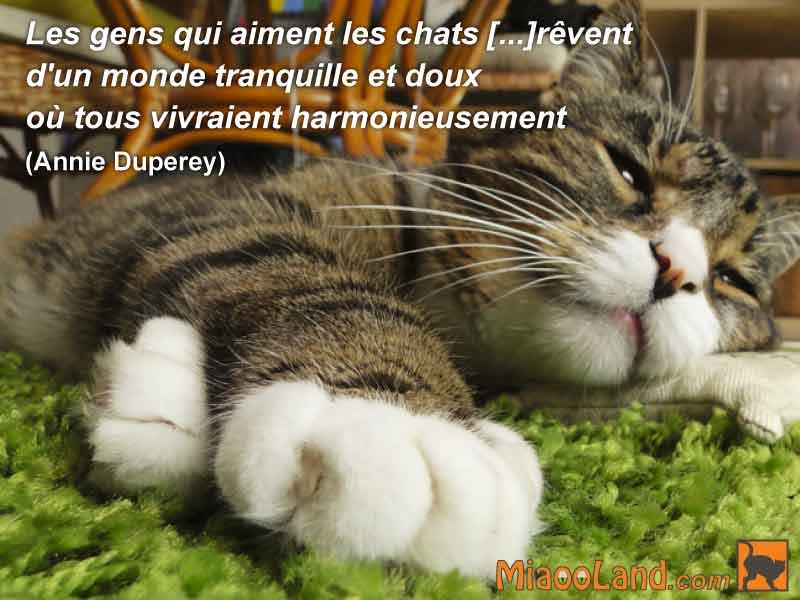 Les-gens-qui-aiment-les-chats--revent-d-un-monde-tranquille.jpg