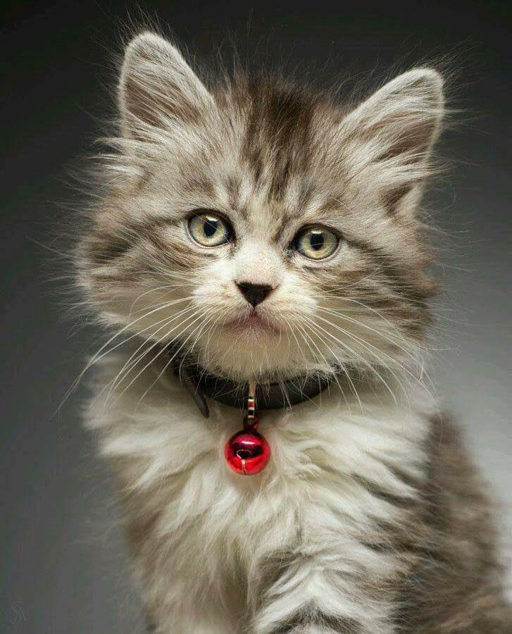 chaton grelot.jpg