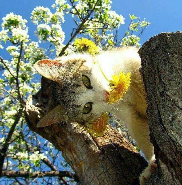 chaton fleur.jpg