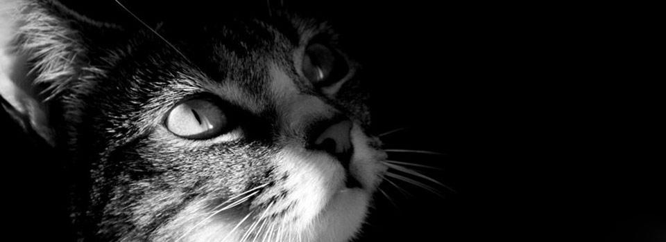 touche-pas-a-mon-felin