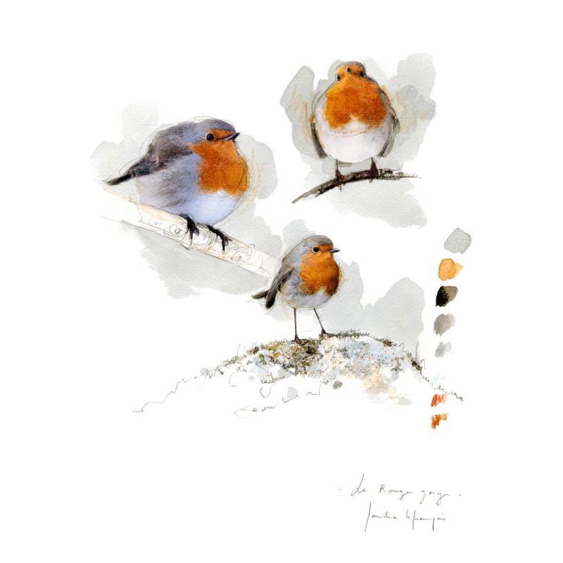 oiseaux-du-jardin-sandra-lefrancois.jpg