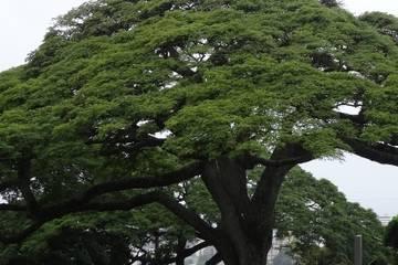 Un premier arbre a été planté !