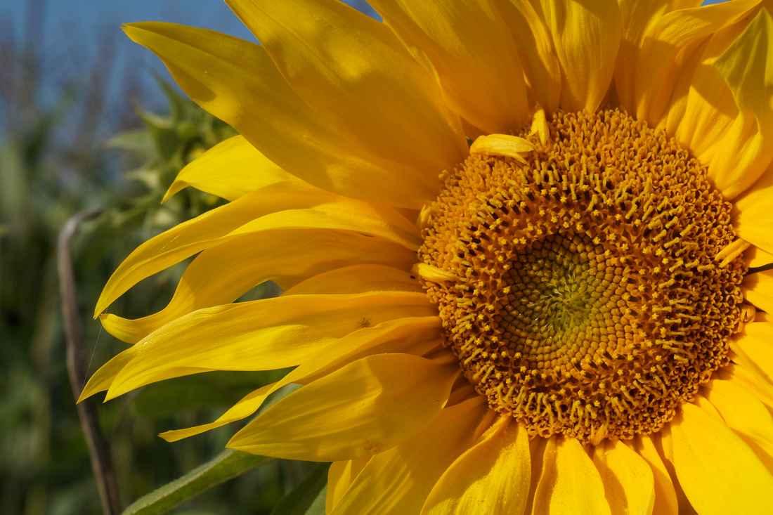 solei----.jpg