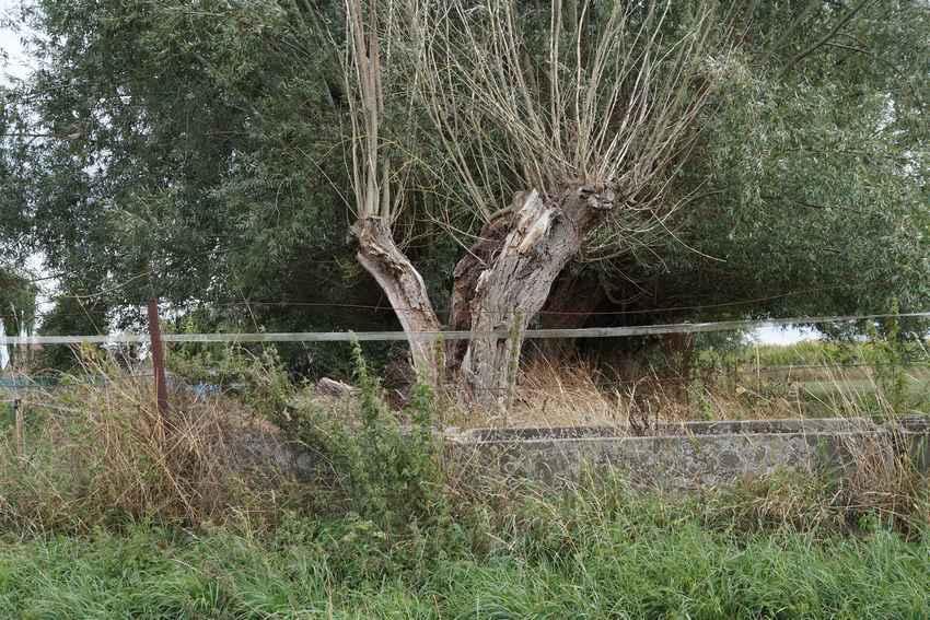 arbrebrise-aout18-1.jpg