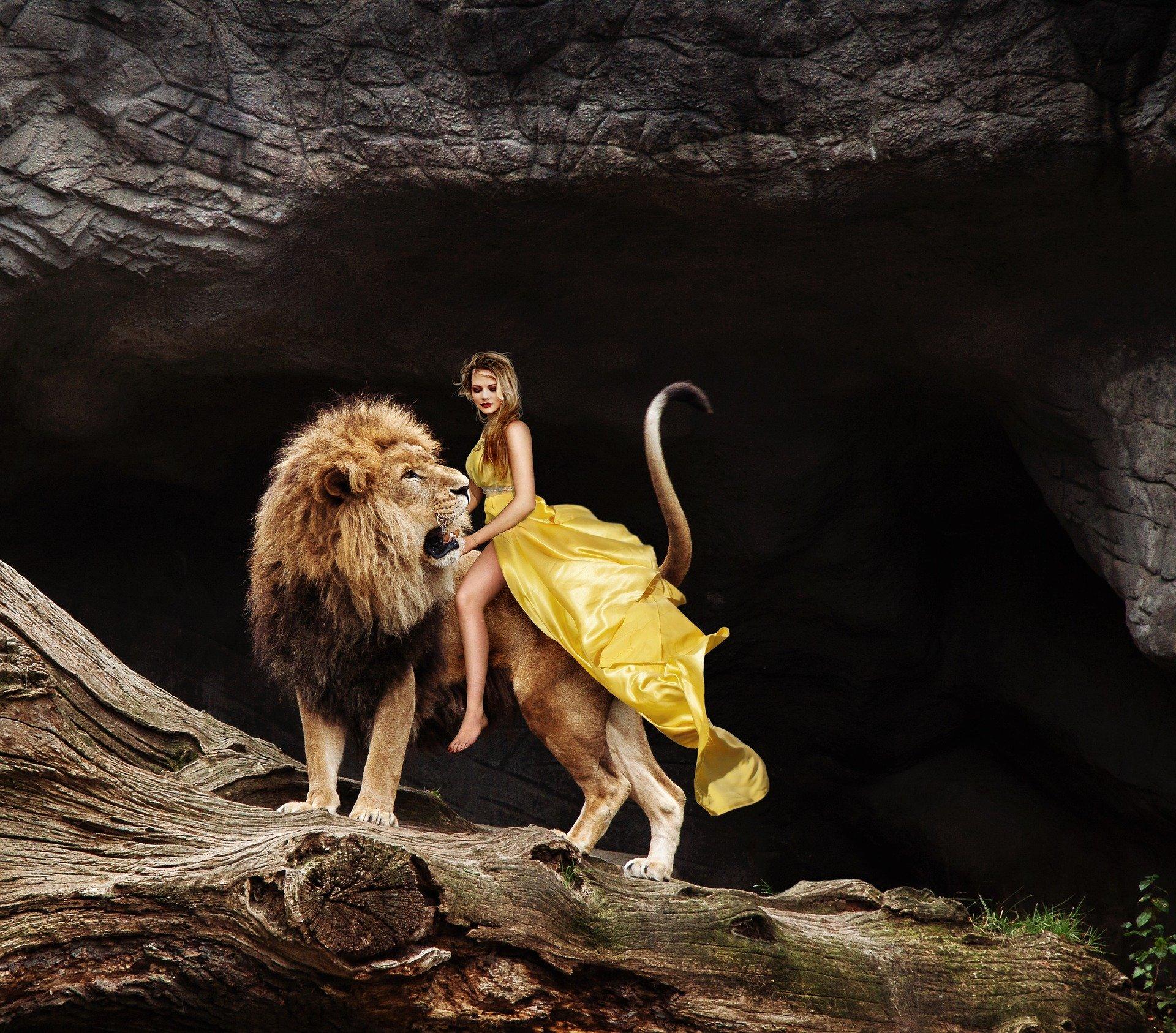 lion-3403595_1920