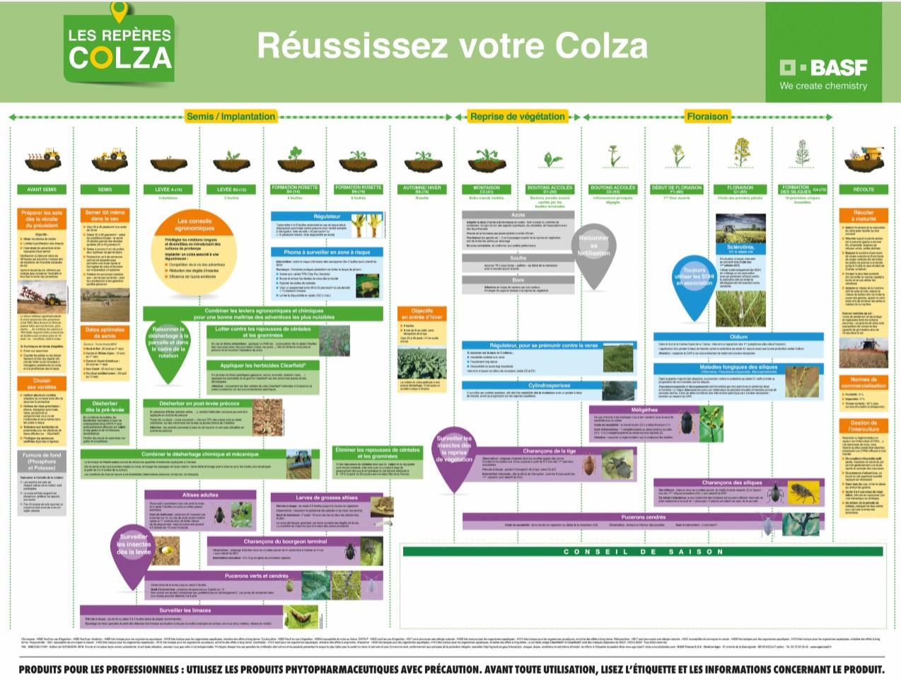 COLZA.jpg