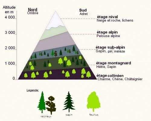 etage-de-vegetation24