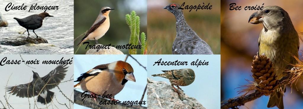Pave-oiseaux-1024x370
