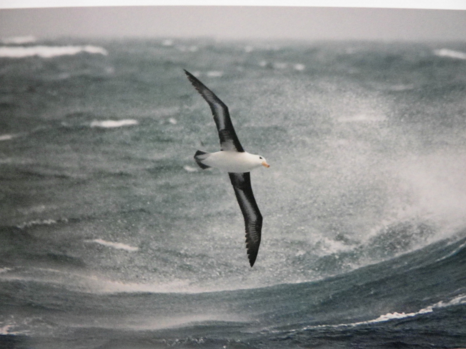albatros cap horn