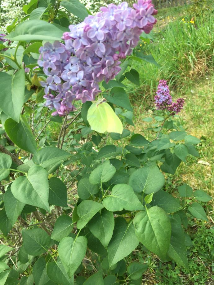 Joyeux papillon