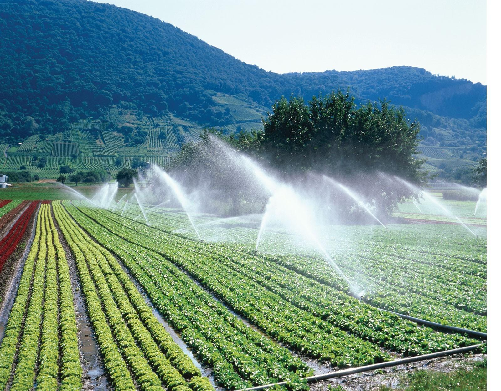 irrigation-2.jpg