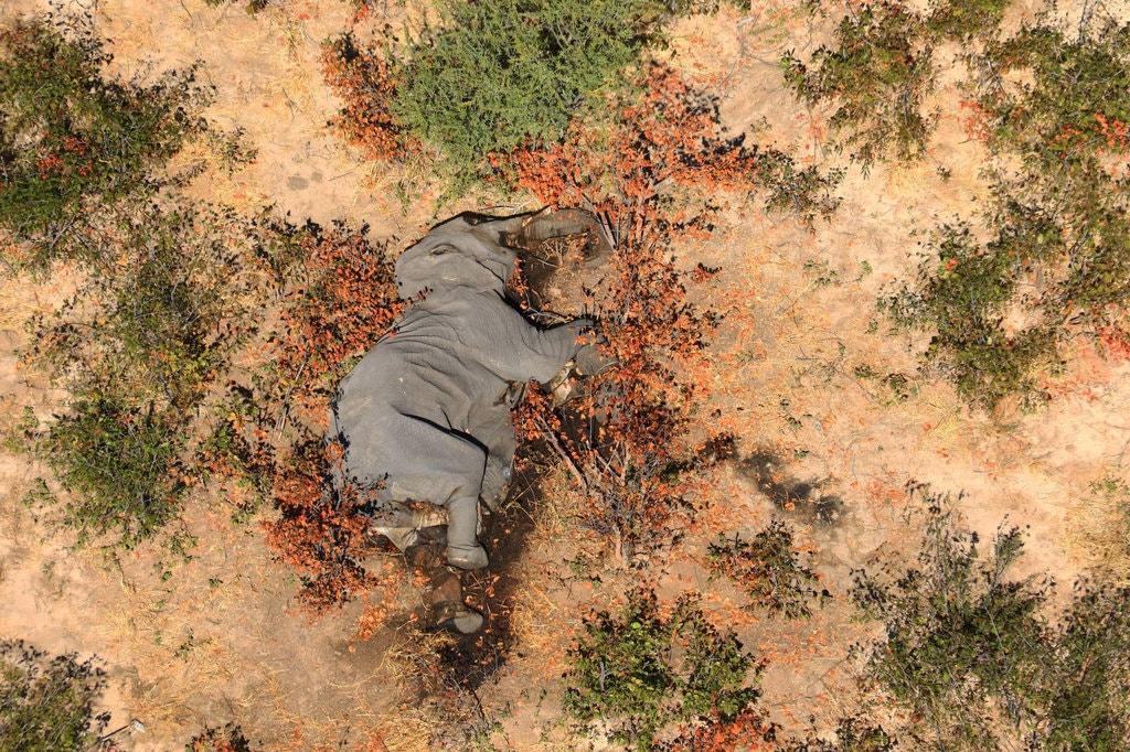 Where elephants go to die