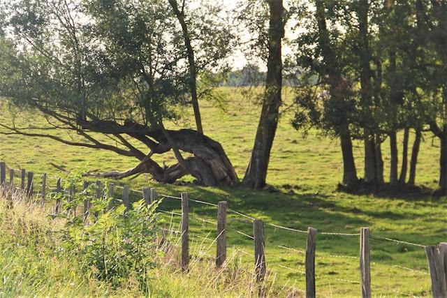 arbres amoureux