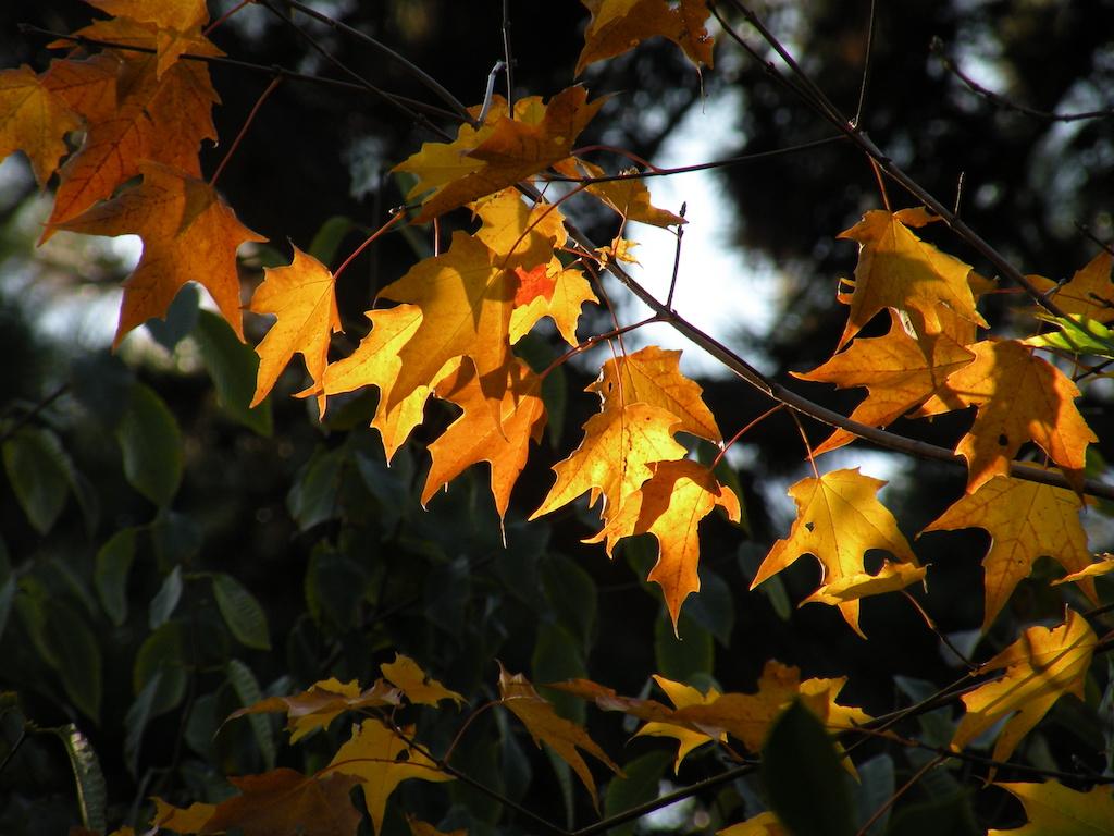 Lumière d\\\'automne