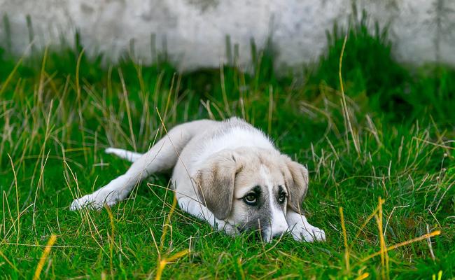 chien-ennui-133837