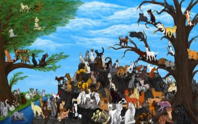 la guerre des clans par lil'