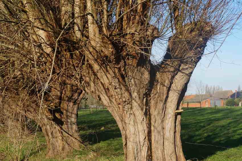 arbres-les-annees