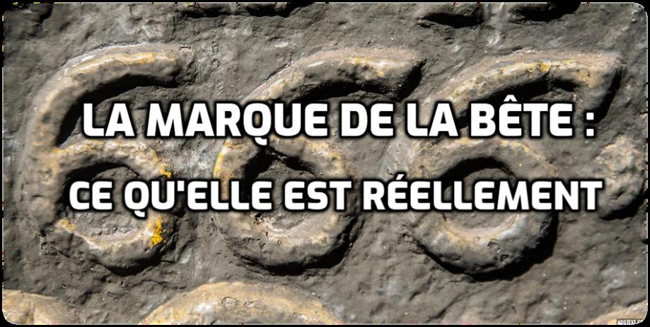 bête4.png