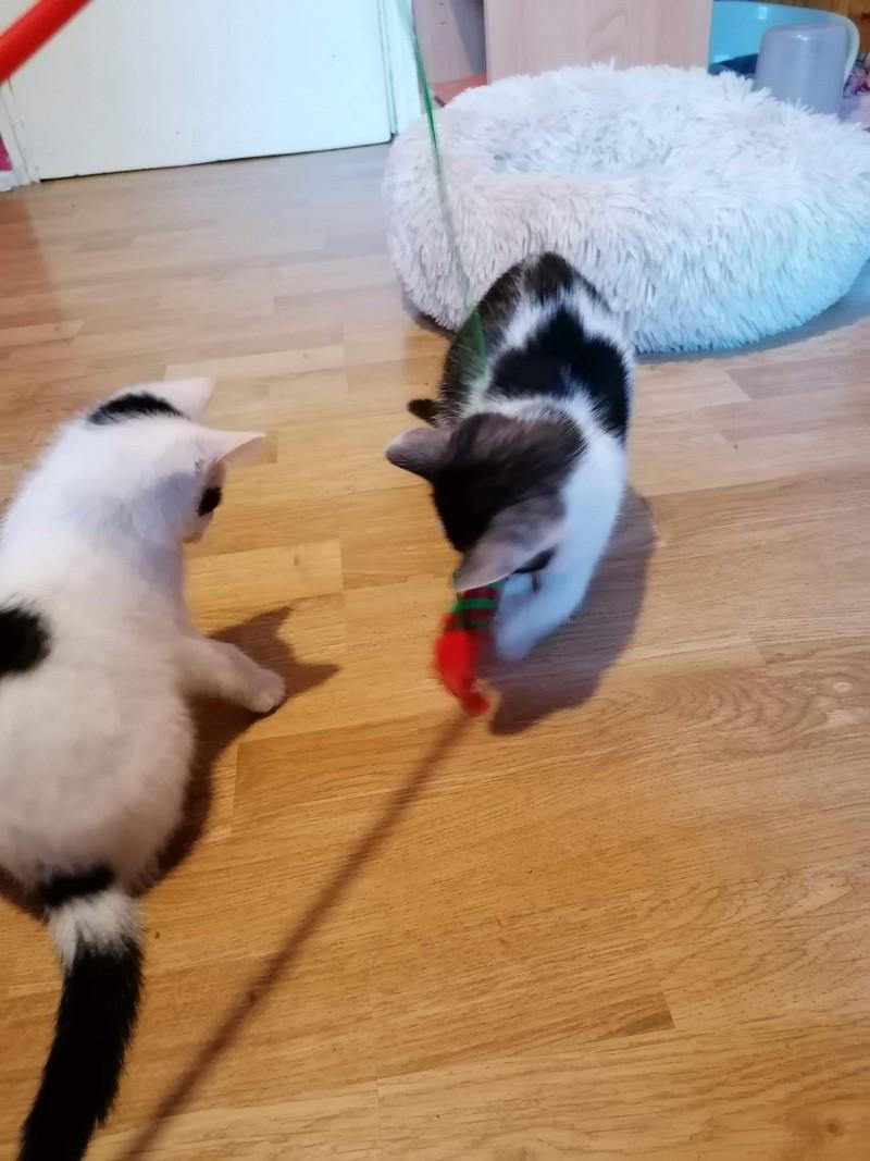 Balou et Sushi