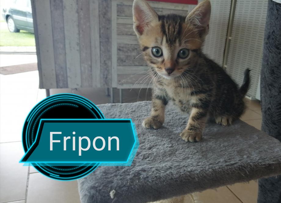 Fripon