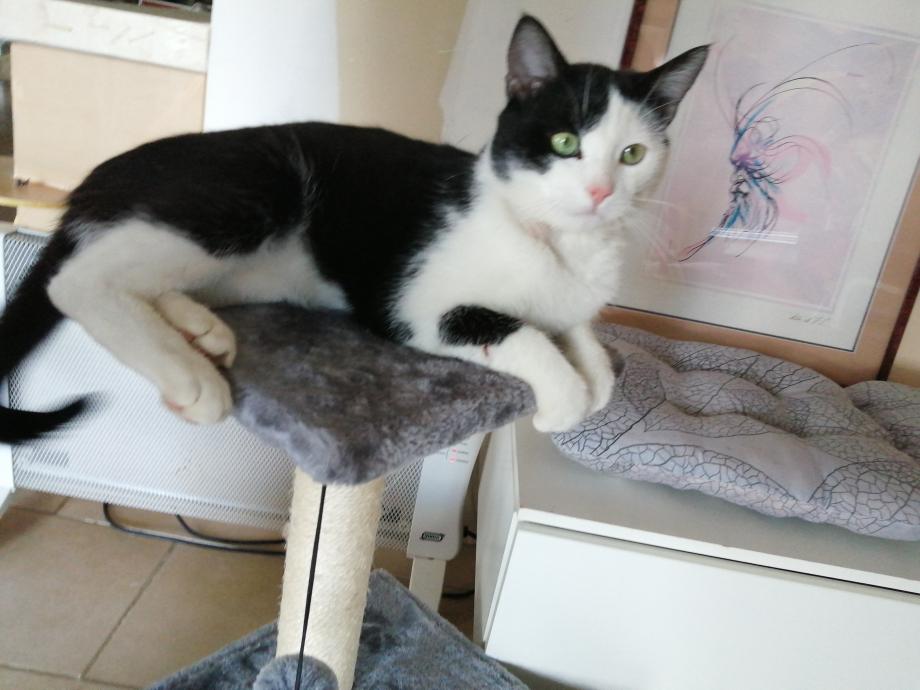 loulou sur arbre a chat 3