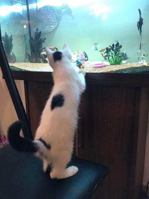 Sushi aquarium