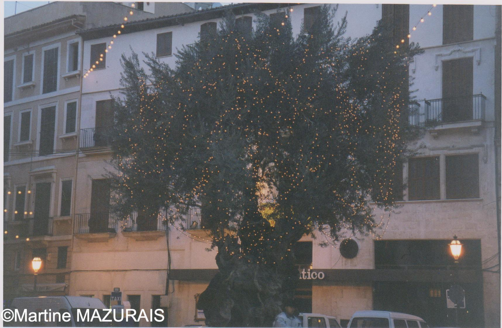 Décembre 2000 - 04 - Palma - Olivier millénaire *