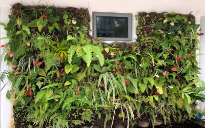 La végétalisation de petits espaces avec des murs