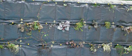 Plants dans mur filtrant